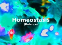 what is homeostasis